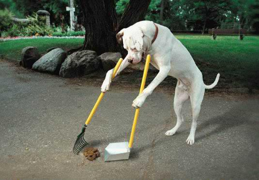 dog-doing-his-own-chores1-1